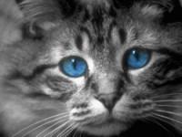 """Предпросмотр схемы вышивки  """"кот """" ."""